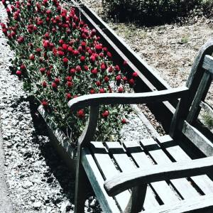 高野花見山にお花を見にお出かけしてきちゃいました!Strawberry candleかわいいお花です