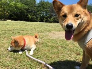 広~い公園でくつろぐ愛犬たち