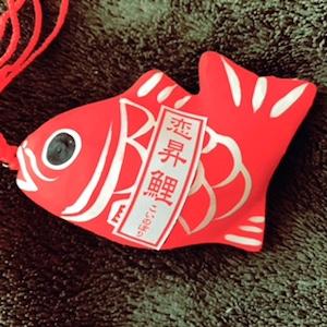 10日の初こんぴら(金刀比羅神社例大祭)ひいた「恋昇鯉(このぼり)」という名のおみくじ。