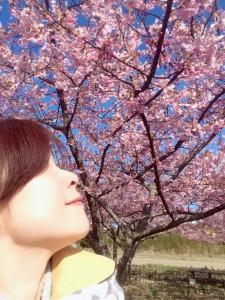 勿来河津桜