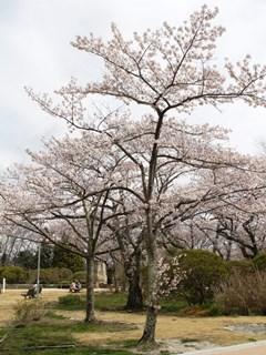 170412 matsugaoka-03