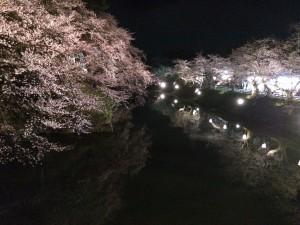 弘前城の夜桜 幻想的で美しいですね。