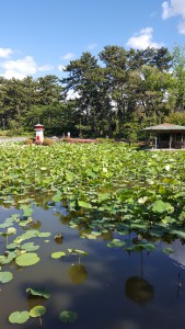 新潟総鎮守 白山神社の蓮池。ぼーっとしているだけでも癒されます。