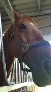 三和町にある厩。カッコいいお馬さんがいっぱい‼