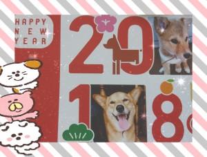 実家の年賀状は、やっぱりマリがモデルでした(*^^*) この笑顔を見ると福がいっぱい訪れそう🎵 私も今年一年、笑顔を忘れずに過ごしたいと思った年明けでした❤️