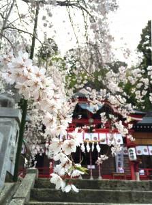 2015小川枝垂桜