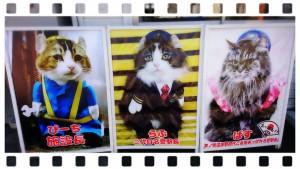 ぶらり旅~(*´∀`) 芦ノ牧温泉駅の駅長さんに会いに行きました🐱✨写真のかわいい姿は見ていましたが、実際に見るのは初めて❗とってもとってもとっても可愛かったです💓