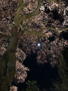 4月8日(金)の夜。お月様とシダレザクラの競演でした^^