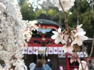 ここの桜を今年も見られて良かった^^