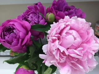 先週の放送でバラの話をしましたが、実は芍薬も大好きな花です。