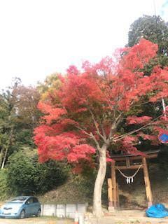 医療センターの見学の帰り、松ヶ岡公園脇を通ったのですが・・・なんと真っ赤なもみじ!