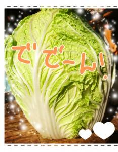 じーちゃんが作ったでっかい白菜