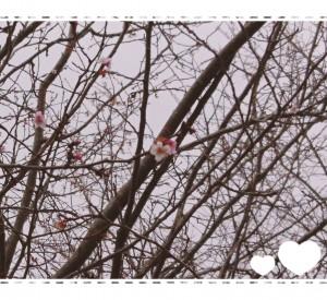 桜が咲いている🌸!! と言っても、これは冬桜🌸 満開の桜の季節が待ち遠しい~!