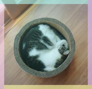 6月12日放送 こちらは杏(あん)ちゃん❣これはまさしく猫鍋! 生猫鍋に感動!!
