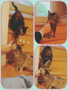 猫はやっぱりちゅ~るがお好き♡