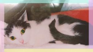 同じく中央台のリリちゃん♡キレイなお顔♡ 元野良猫ですにゃ(=^・・^=)