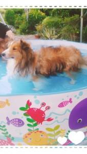 プールになれたら楽しく遊べるようになるかも!と子供用プールを買いました。(ホームセンターで格安になっていました(≧▽≦)) この顔・・・仁王立ち!いや、棒立ちか・・・((+_+))