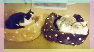 右は今年1月にお星さまになった先住猫のミル姉ちゃん☆ だいぶ歳の差があったけれど、ルルちゃんはミル姉ちゃんが大好きでした♡