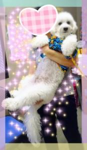 小型・・・犬???(笑) 小型犬のMIXのはずなんだけどな~♡ レオ君10キロあります(≧∇≦)