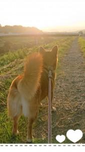 会場でワンちゃんに触れたり、犬や猫などのお話しを聞いていたら、早く家に帰って愛犬をわしゃわしゃと撫で回したくなりました。