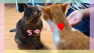 ♪ちゅ~るちゅ~る♪ ♪〇〇オちゅ~る♪ これがあればほとんどの猫ちゃんとお友だちになれるぜぃ♪