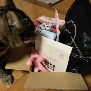私のための猫グッズがたくさん届きました!うちの愛猫のチェックも済んだ!