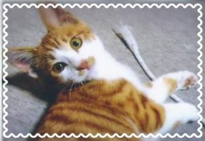 茶色のトラ柄×白い仔猫ちゃん😻 生後約4ヶ月の男の子です❢ 食欲旺盛!人懐っこくで元気な猫ちゃんです♡😻