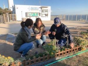 灯台の敷地の西側に新たに花壇が作られています。四季折々の植物が楽しめるよう、そしてこの場所の風土に合ったものが主に植えられています。