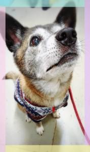 12歳。シニア犬だけど、まだまだ元気です(*^▽^*)