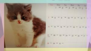 仔猫時代の写真がカレンダーに選ばれたんだにゃ (=^・・^=) だって僕かわいいもん!