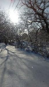グランデコで スキーしました! 楽しかった♪ 今シーズン もう1回行きたい!!(笑)