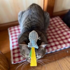 家猫修行中のみかんちゃん。頭に魚のおもちゃを乗せられ、じっと耐えるのも修行です・・・