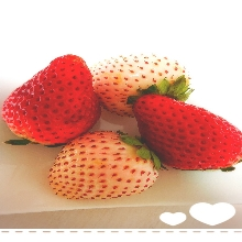 赤いイチゴに白いイチゴ🍓どっちもとっても甘くて美味しかった🍓 (⋈◍>◡<◍)。✧♡