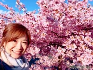 2020河津桜2