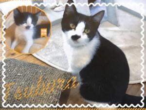 優しくて静かな性格♡ 他の猫ちゃんとも仲良くできます(*^-^*)