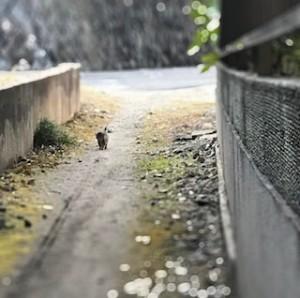 路地っていい感じ♪我が家の前の小道、ちょっと画像加工してみました^^小さい豆粒みたいなのはうちの愛猫です。