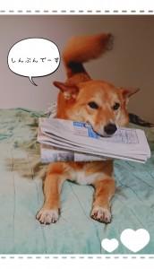 毎日、祖父に新聞を届けるのはマリのお仕事です。