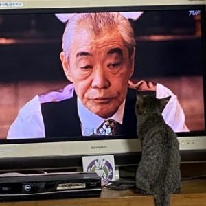 うちの新入りにゃんこ。ときどきテレビを観ます。半沢直樹も観ますよ!「悪役にゃ〜♪」と言っているとかいないとか?
