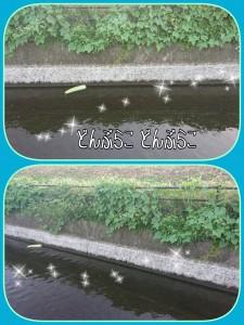 散歩をしていると川の向こうからどんぶらこ~どんぶらこ~ 大きな大きな・・・なんだろう?? 流れていきました(;・∀・)