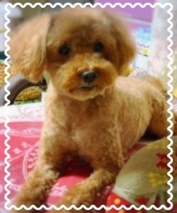 レッド=茶色のかわいい子です(*^-^*)