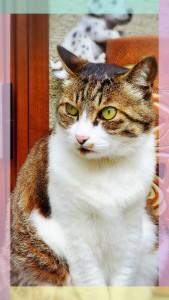 まずは一番上のお兄ちゃんのムーちゃん猫 マイペースな猫ちゃん♡