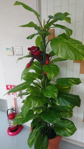 利用者さんのご家族から頂いた おさるさんが観葉植物に(笑)! これ靴下で作ったんですって!