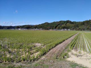 201110 momiji-04