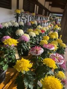 勿来の関・菊の花1