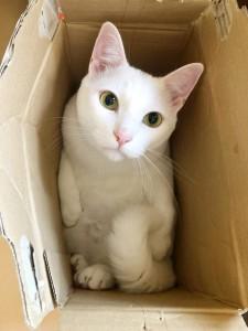 僕はミリア。 ごはんにおやつが大好き! 人も大好き! 穏やかな性格の猫ちゃん(=^..^=)ミャー