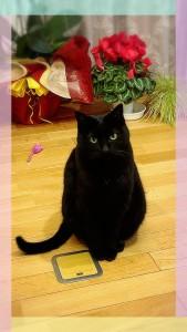 とってもキレイな黒猫ちゃん♂ 絵画のようです✨