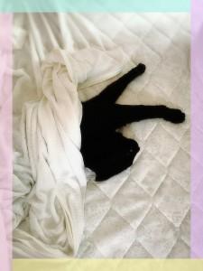 ママのベッドは僕のものにゃあ(=^・・^=) 真ん中でスヤスヤ・・・Zzz