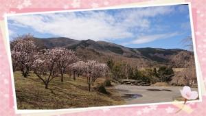おにぎりを持って高野花見山へ行こう♫ 先週のスマイルいわき情報局でご紹介しました、内郷の高野花見山。 お花がたくさん咲いていてとってもきれいです。 写真は花見山から見える湯ノ岳です。