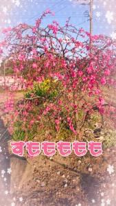 21-03-26-20-51-11-155_deco