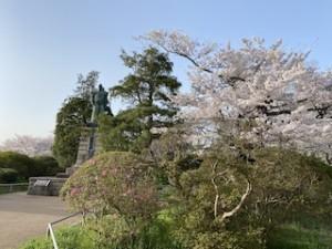 安藤公と桜!